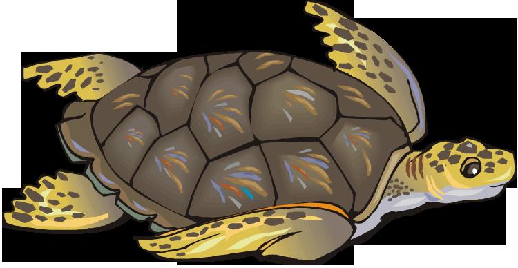 Sea Turtle Clip Art Free Clipart Images Clipartix Free Clip Art Clip Art Turtle