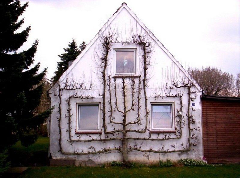 planter un espalier ou une palmette chez vous ma passion du verger gardens pinterest. Black Bedroom Furniture Sets. Home Design Ideas