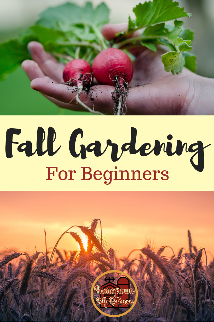 Fall Gardening for Beginners - Homegrown Self Reliance
