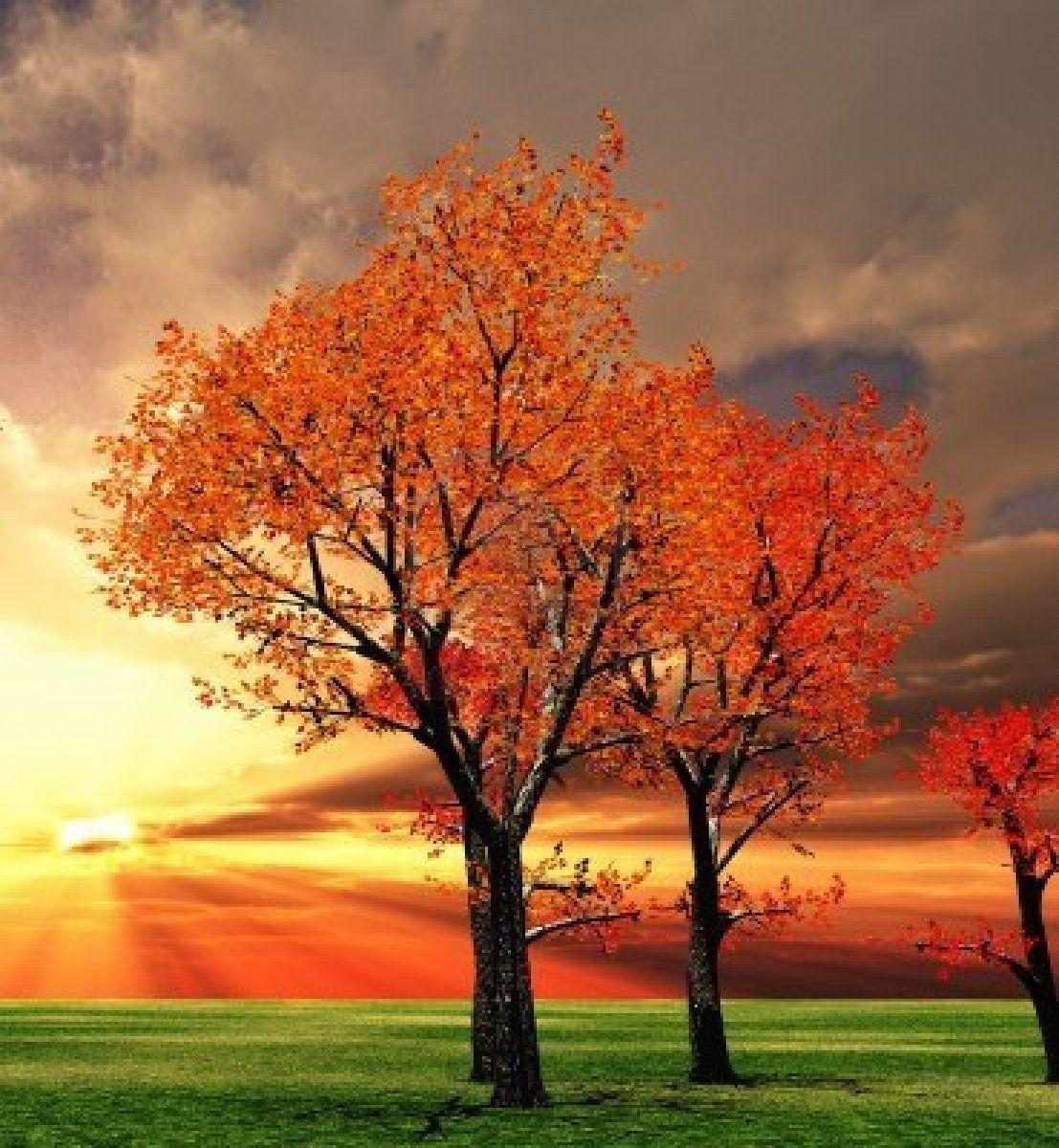 Stock Photo Autumn Scenery Fall Trees Photography Scenery