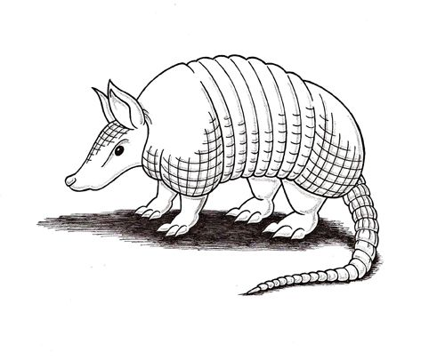 how to draw an armadillo # 13