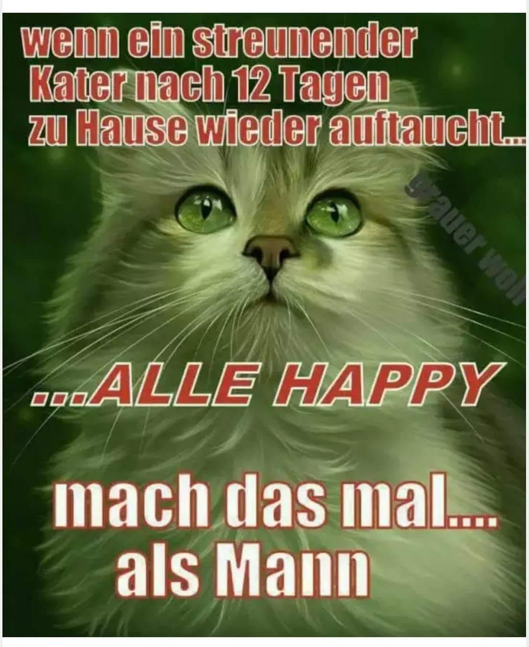 Manner Lustig Witzig Spruche Bild Bilder Kater Humor Lustig Lachen Und Weinen Lustige Bilder