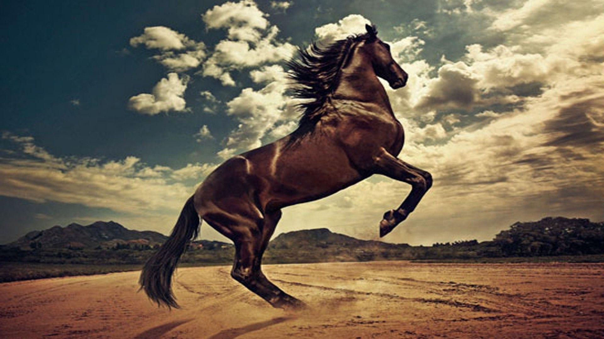 Horses Rising Horse Colts Animals Rearing Nature Pets Beautiful CreaturesHorse WallpaperAnimal