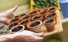 5 Pflanzen, die Sie im Januar aussäen können #kräutergartendesign