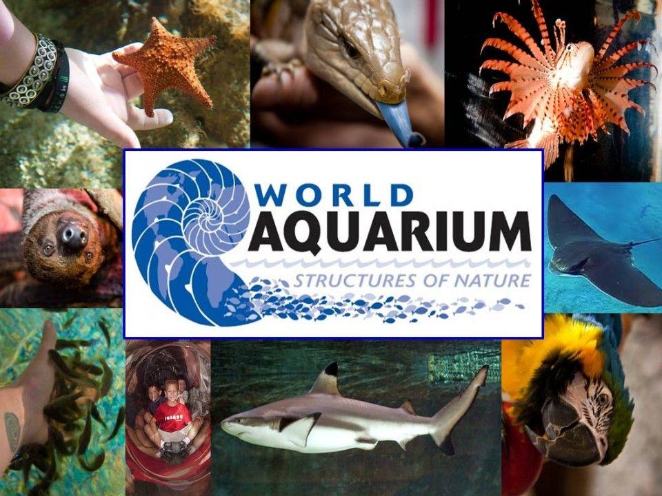 World Aquarium | St. Louis, Missouri | Explore the Wonders ...