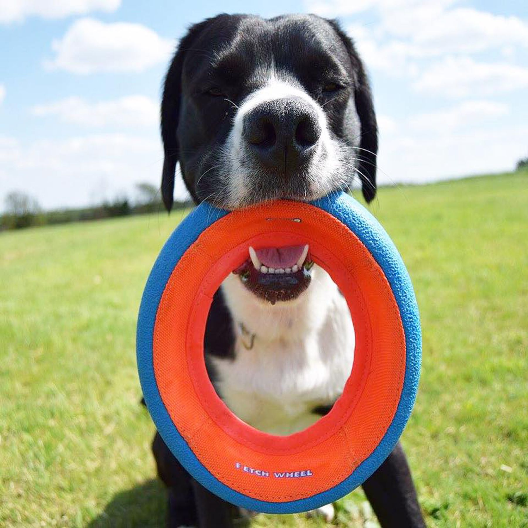 Fetchit Fetch Wheel Dog Toy Dog Toys Dogs Fetch Toy