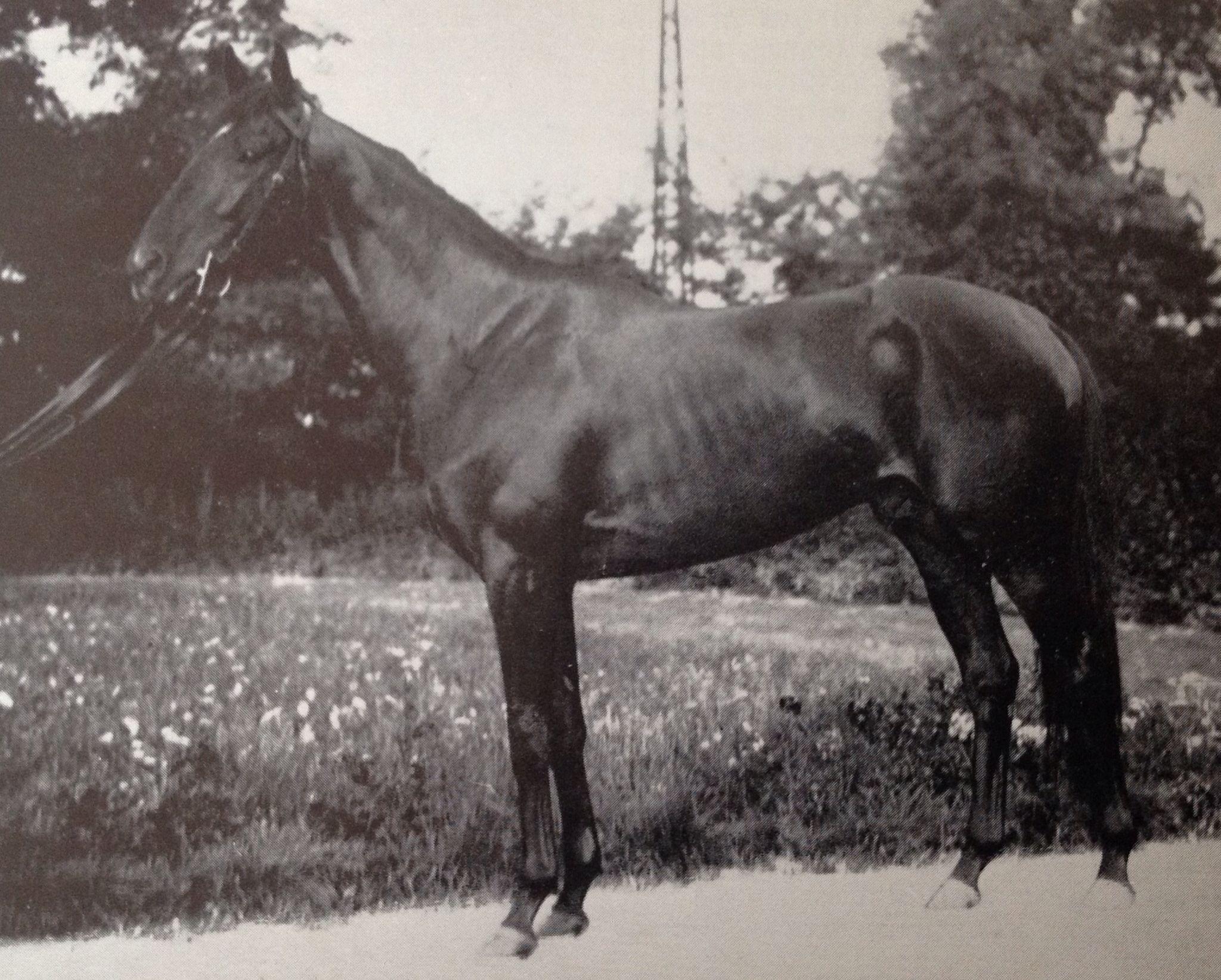 NAVARRO (Ity) CH C 1931, Michelangelo - Nuvolona (GB). Winner 1934 Gran Premio di Milano, Gran Premio d'Italia, both in record time. Not a very sound horse but a singularly brilliant one. Headed the list of sires of winners in 1943 and again in 1946.