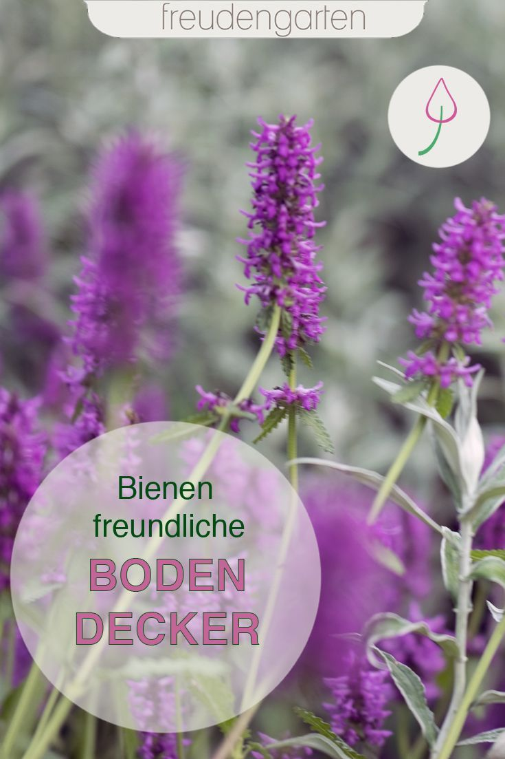 Bienenfreundliche Bodendecker #blumenbeetanlegen