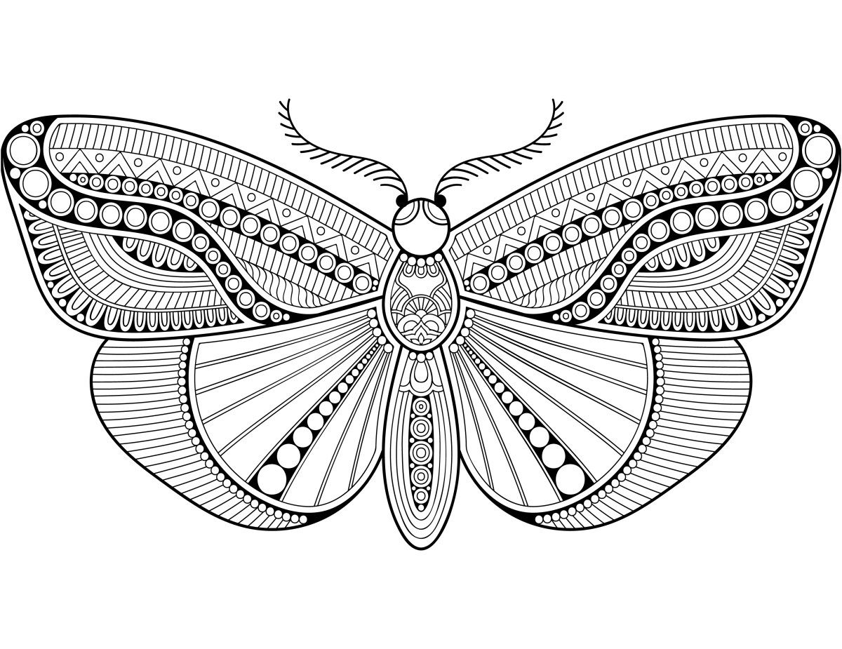 Page Papillon Difficile Coloriage Anti Stress Adulte