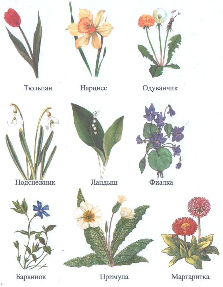 Каталог в картинках и названий цветов