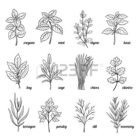 Resultado de imagen para dibujos de hierbas aromaticas - Plantas aromaticas en la cocina ...