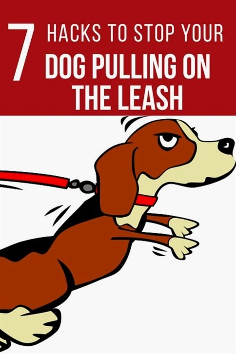 Gemini Dog Training Littleton Ma Dog Training 02360 Dog