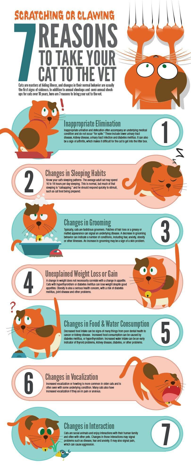 how to fatten up a nursing cat