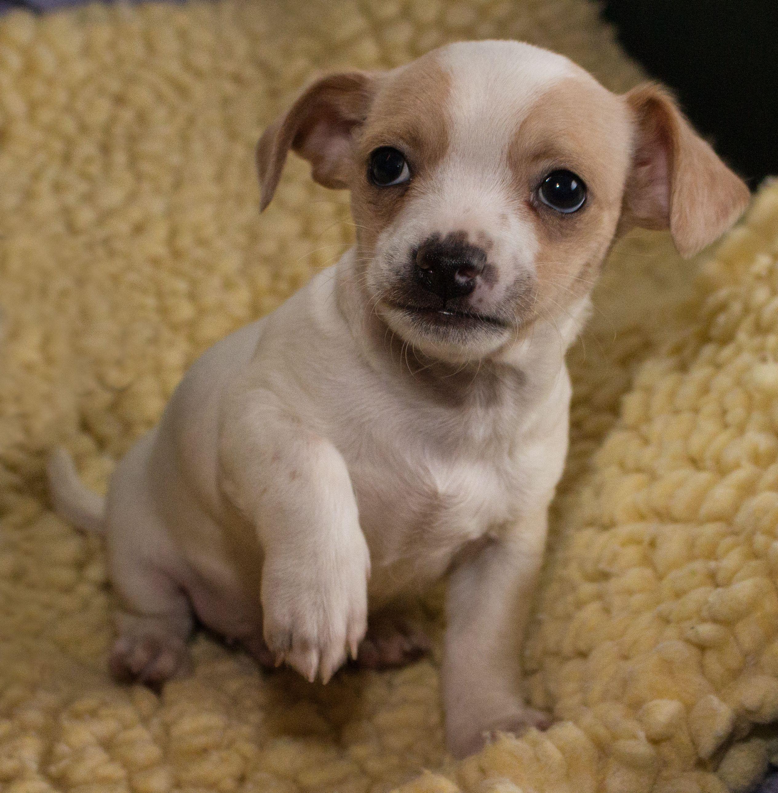 Bart Humane Society of Fairfax County NOVA Pet