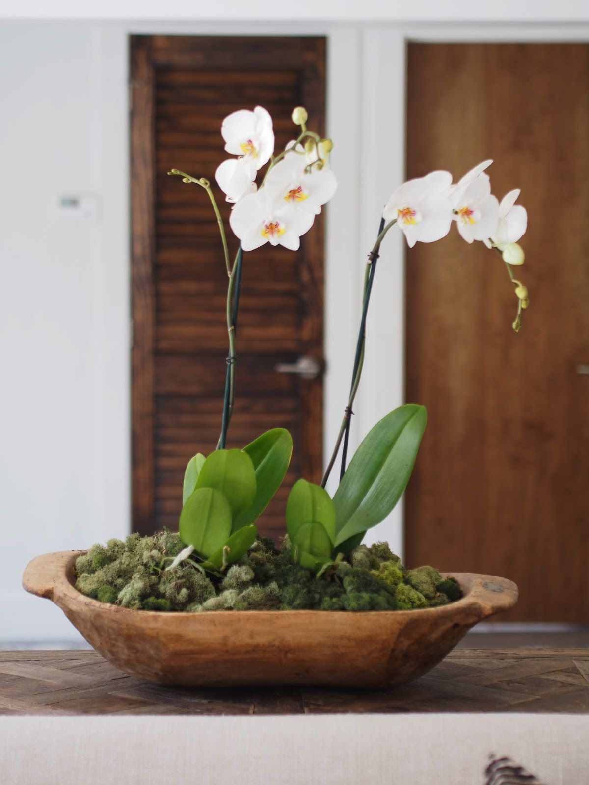 How to potted orchids displayed in a dough bowl ideas pinterest