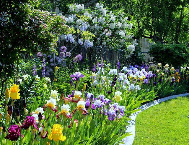 World Of Irises Tall Bearded Irises Revamping An Existing Bed For Maximum Impact Beautiful Gardens Landscape Garden Design Mediterranean Garden Design