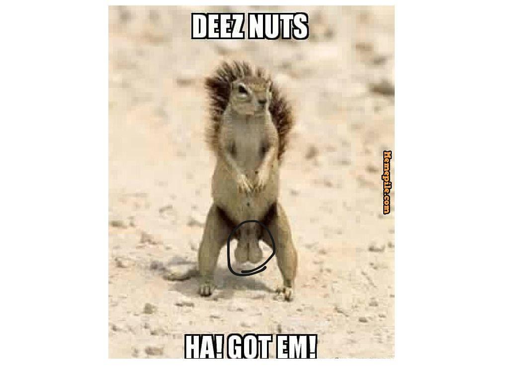 Deez nuts wallpapers free download top pics deez nuts pictures wallpapers adorable wallpapers deez jpg 1024x768