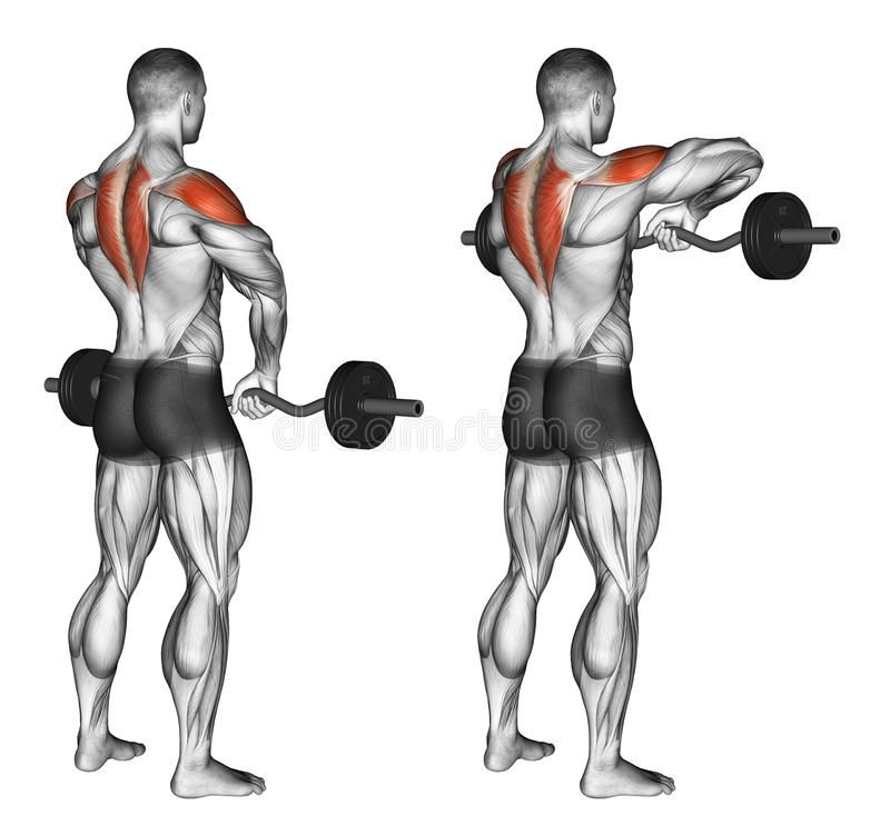 Photo about EZ Barbell Upright Rows. Exercising for bodybuilding ...