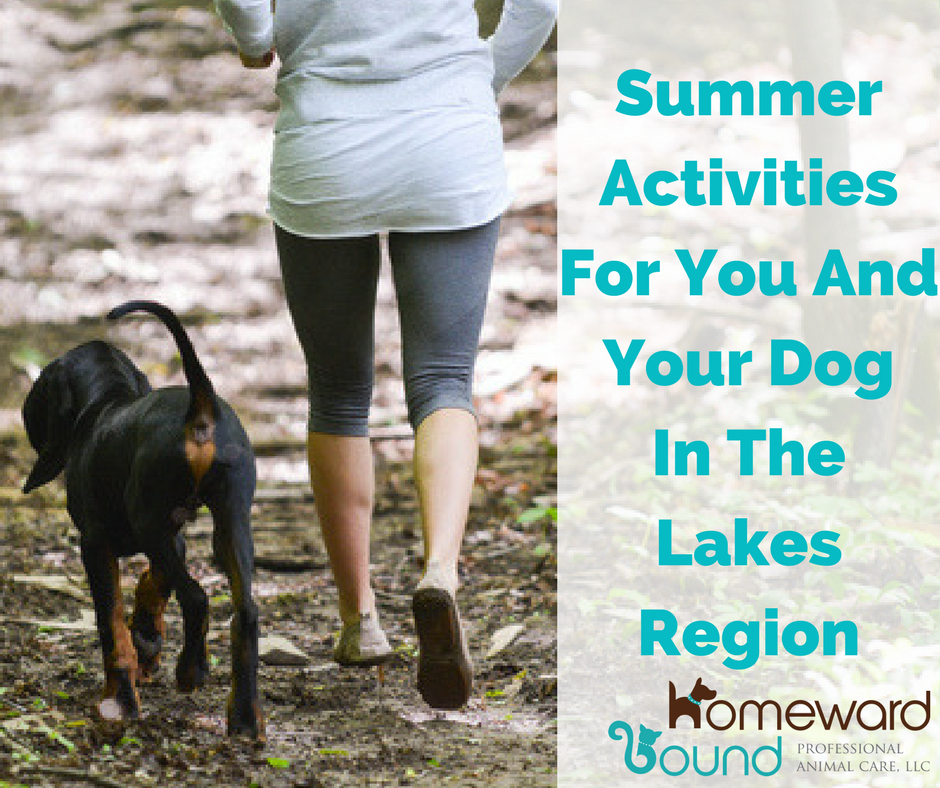 Pet Friendly Lakes Region Nh Summer Activities For You Your Dog Dog Walking Summer Activities Lake