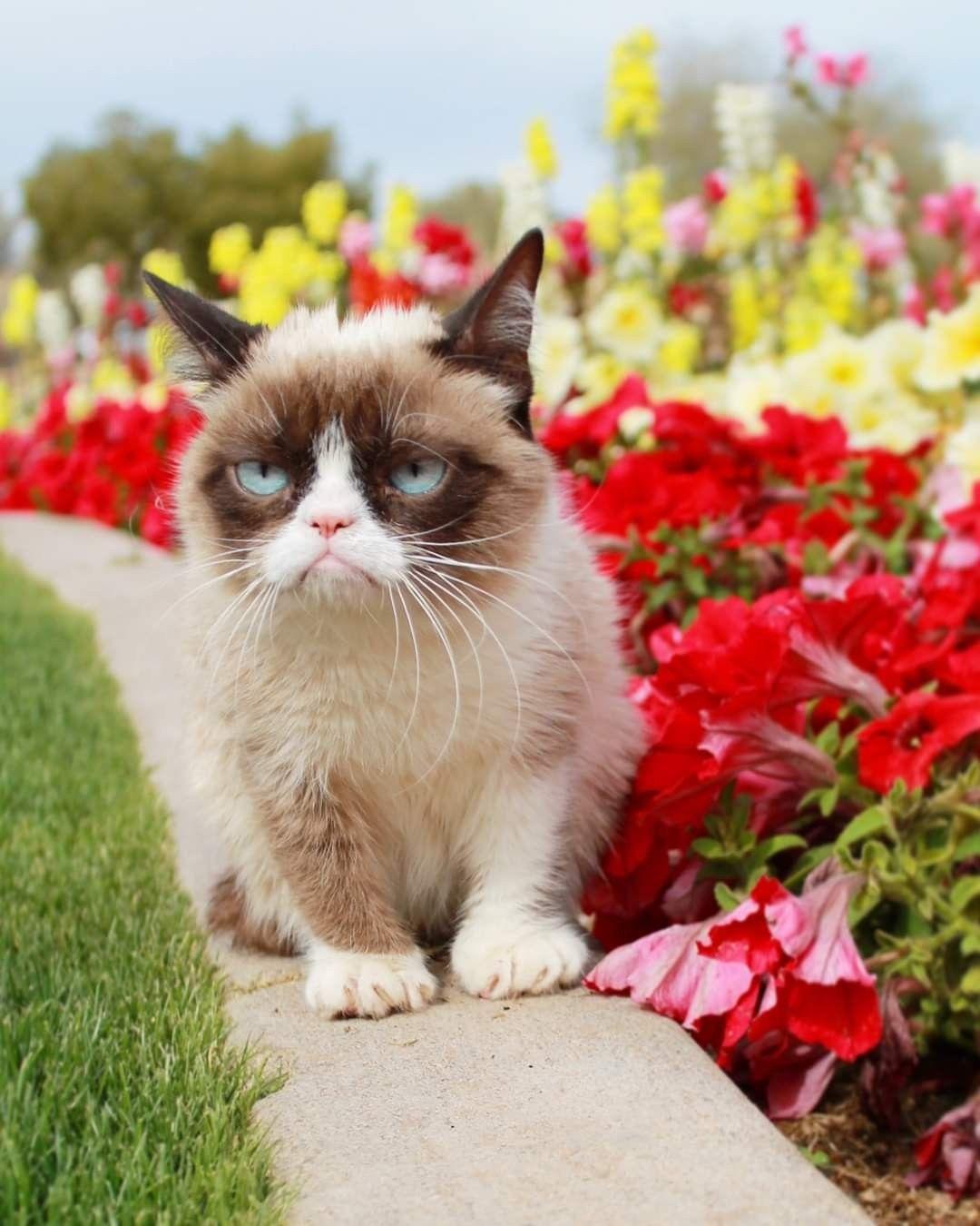 Pin by Ellen Burch on grumpy in 2020 Grumpy cat meme