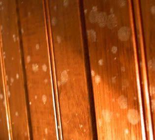 Trucos para eliminar evitar y limpiar manchas de moho y - Como sacar manchas del piso de ceramica ...
