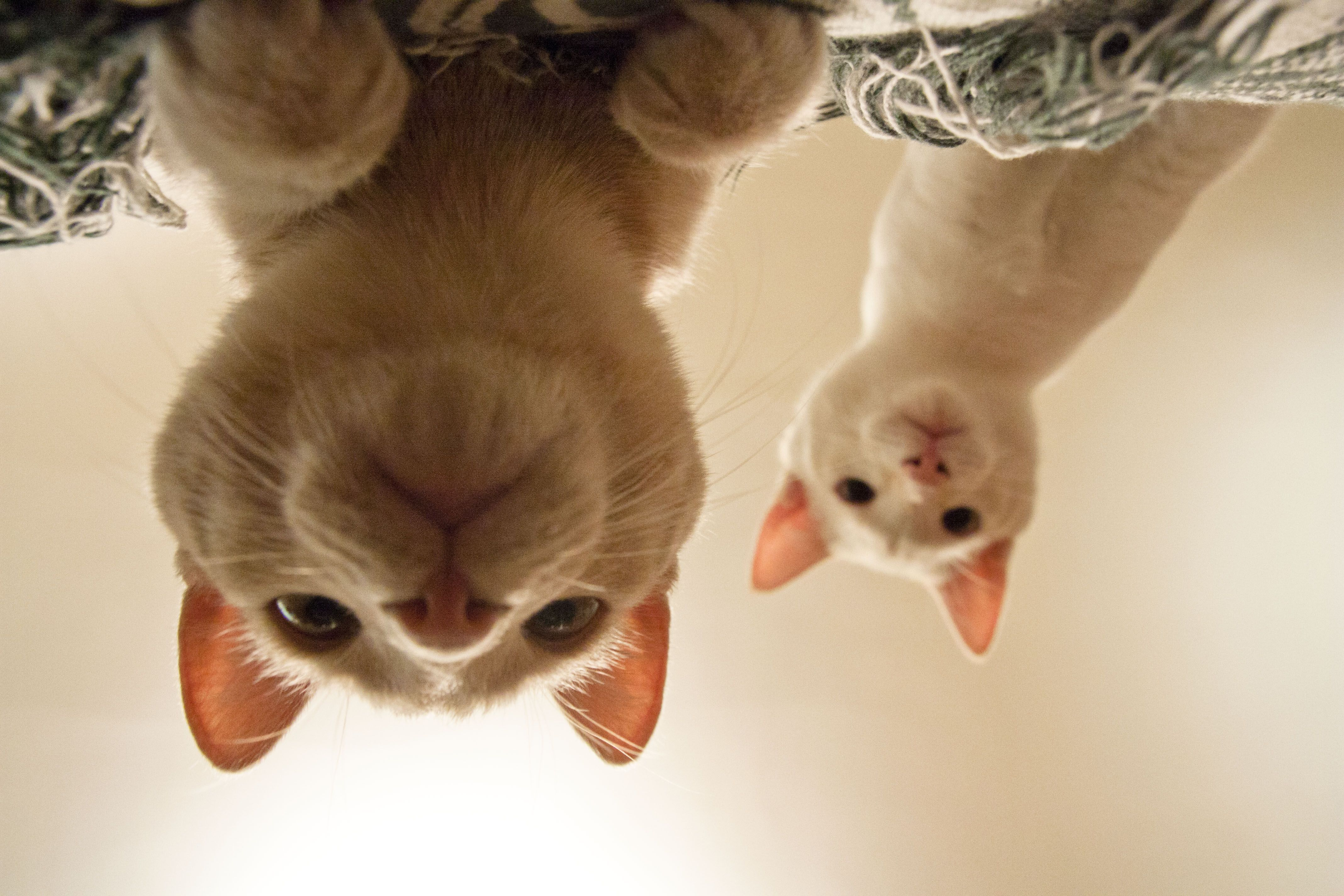 One Writer S Way Kitten Rescue Funny Tabby