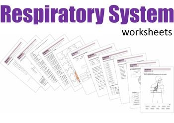 respiratory system worksheets respiratory system word search and worksheets. Black Bedroom Furniture Sets. Home Design Ideas