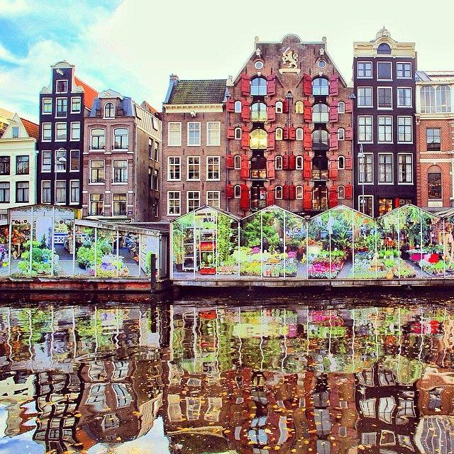 سوق الزهور امستردام