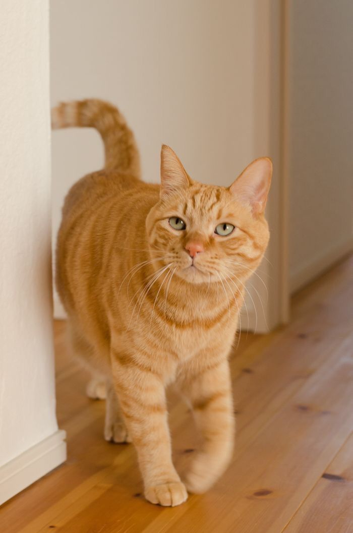 Pin By Vinie Pedra Architecture D On Catzzz Orange Tabby