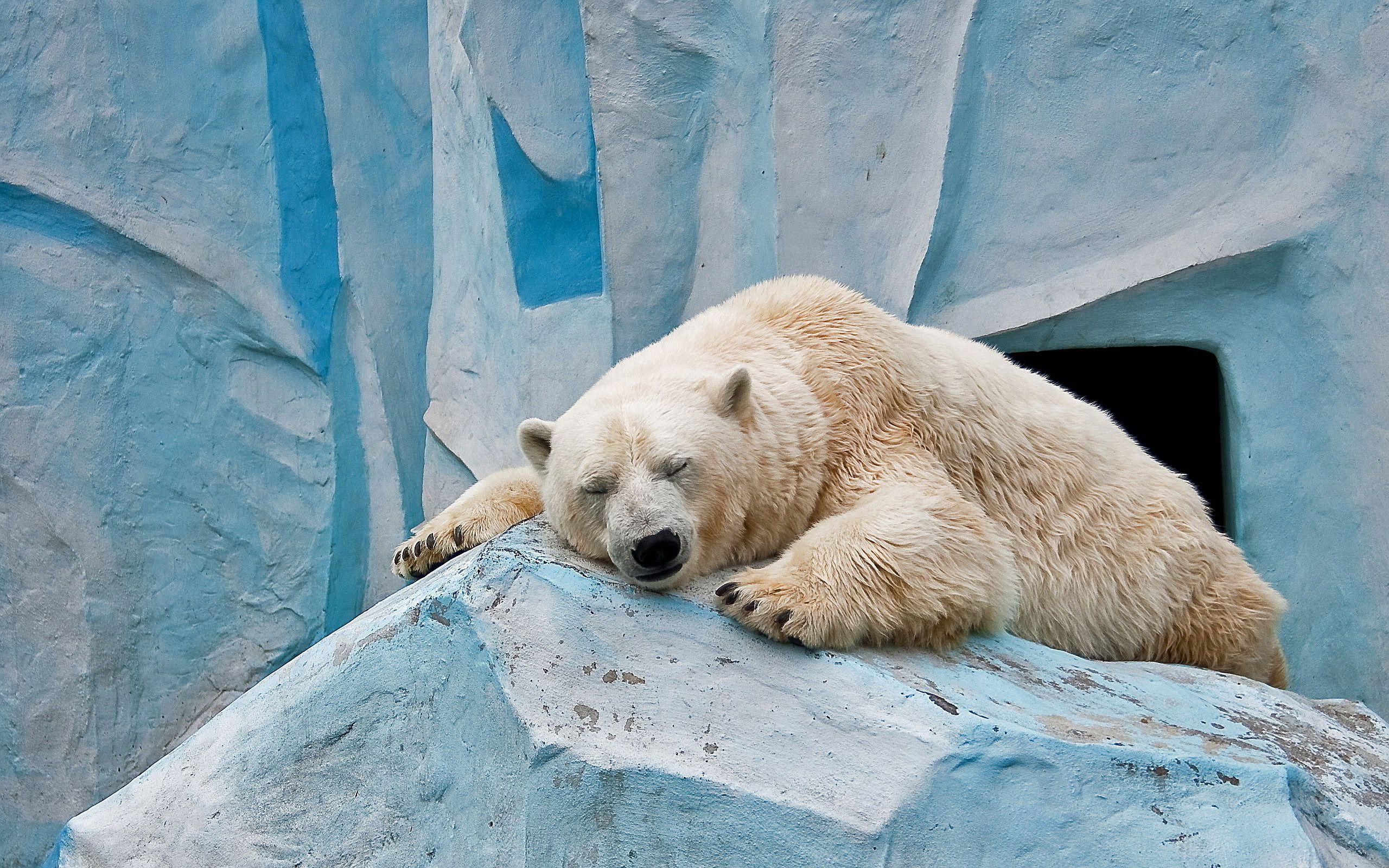 Polar Bear Wallpapers Desktop Background Animals Wallpapers