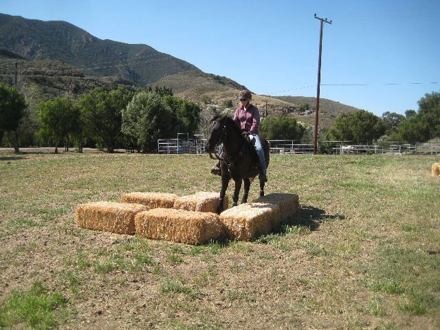 Camarillo Springs Ranch Obstacle Trail Course Clinics Obstacle Trail Horse Camp Horses