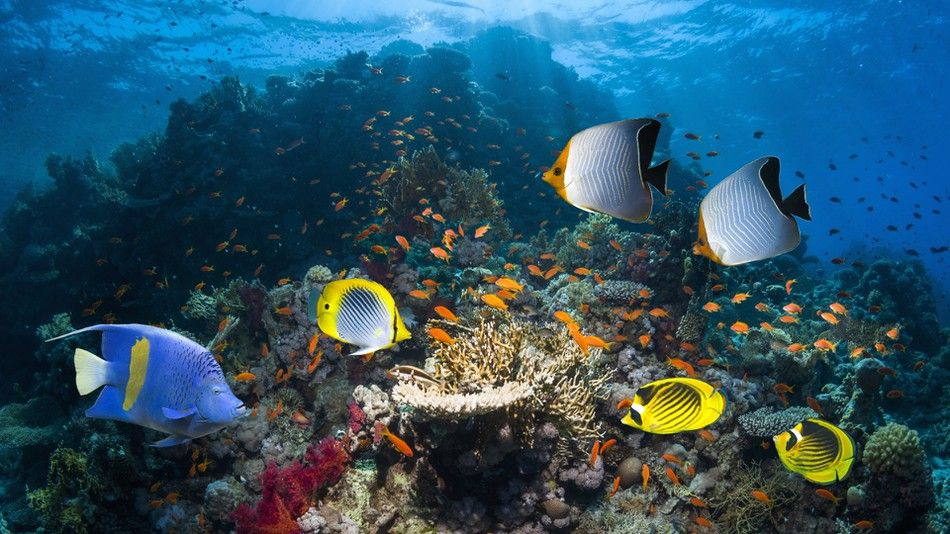 5 major threats to biodiversity and how we can help curb