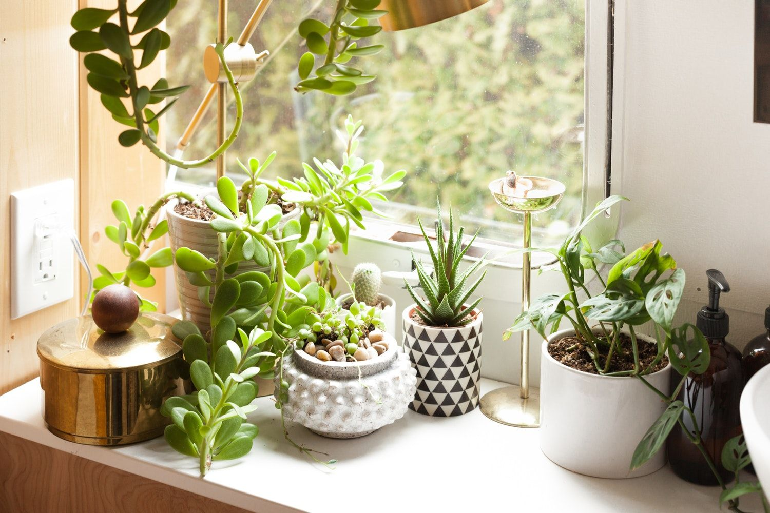 House Plants Decor · Gorgeous Ways To Make Your Home A Lush Green Oasis