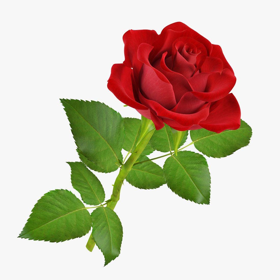Картинки ребенка в розах