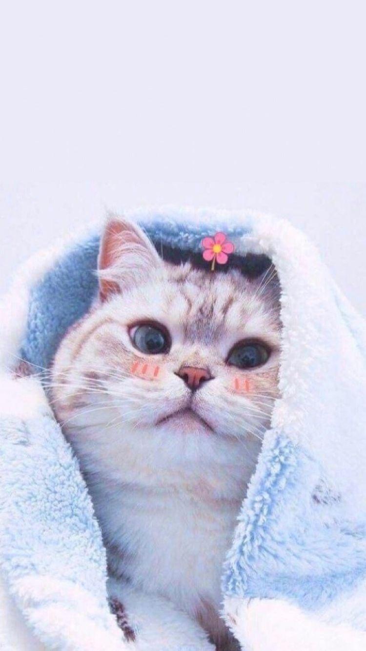 a của Tiêu Tiêu Cute kittens, Stuffed animals, Ảnh mèo