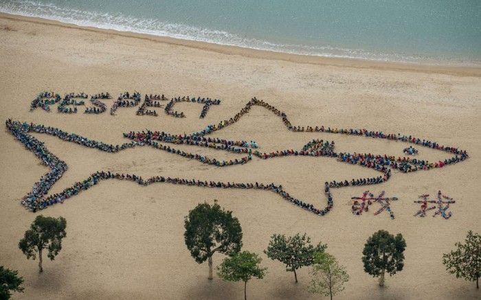 salvar el mar
