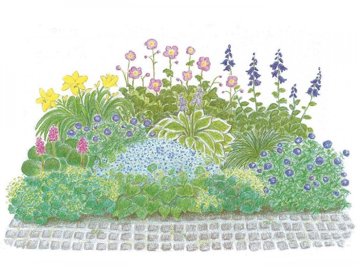 Beet Ideen Fur Jeden Garten Finden Sie Hier Gartenideen Mit Pflanzanleitung Und Pflegetipps Pflanzen In Top Q Schattenbeet Gartenecke