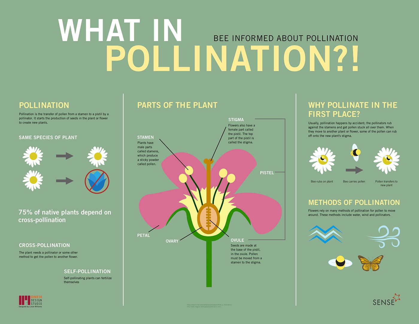 Pollinator Party Pollination Infographic On Behance