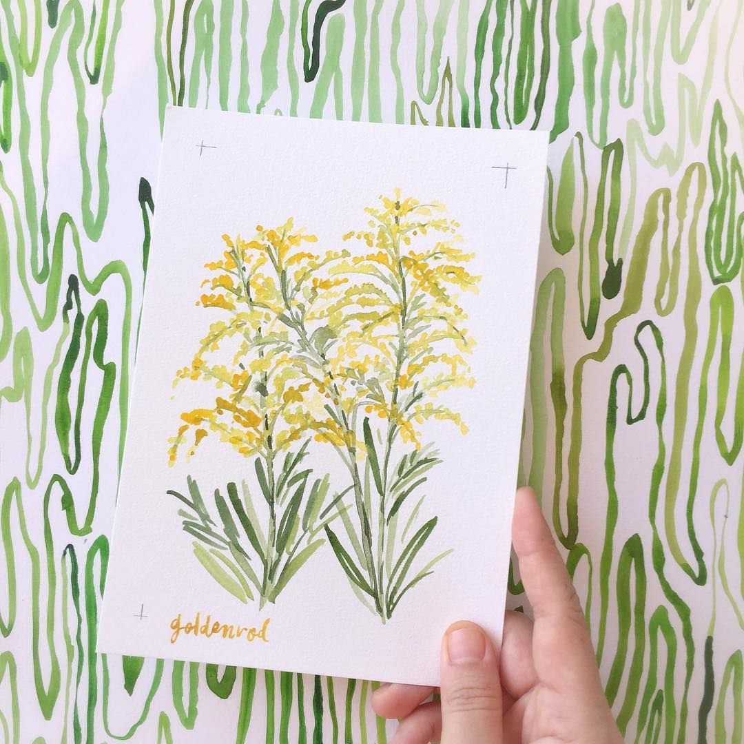 Today S Flower Astilbe Goldenrod I Read Online That This Flower Symbolize Encouragement And Growth An Watercolour Inspiration Watercolor Artist Watercolor