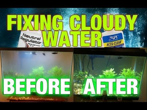 How to fix cloudy aquarium water youtube cloudy fish for How to fix a cloudy fish tank
