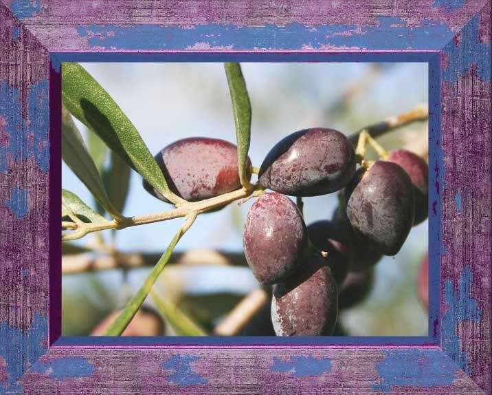 delicious Greek olives