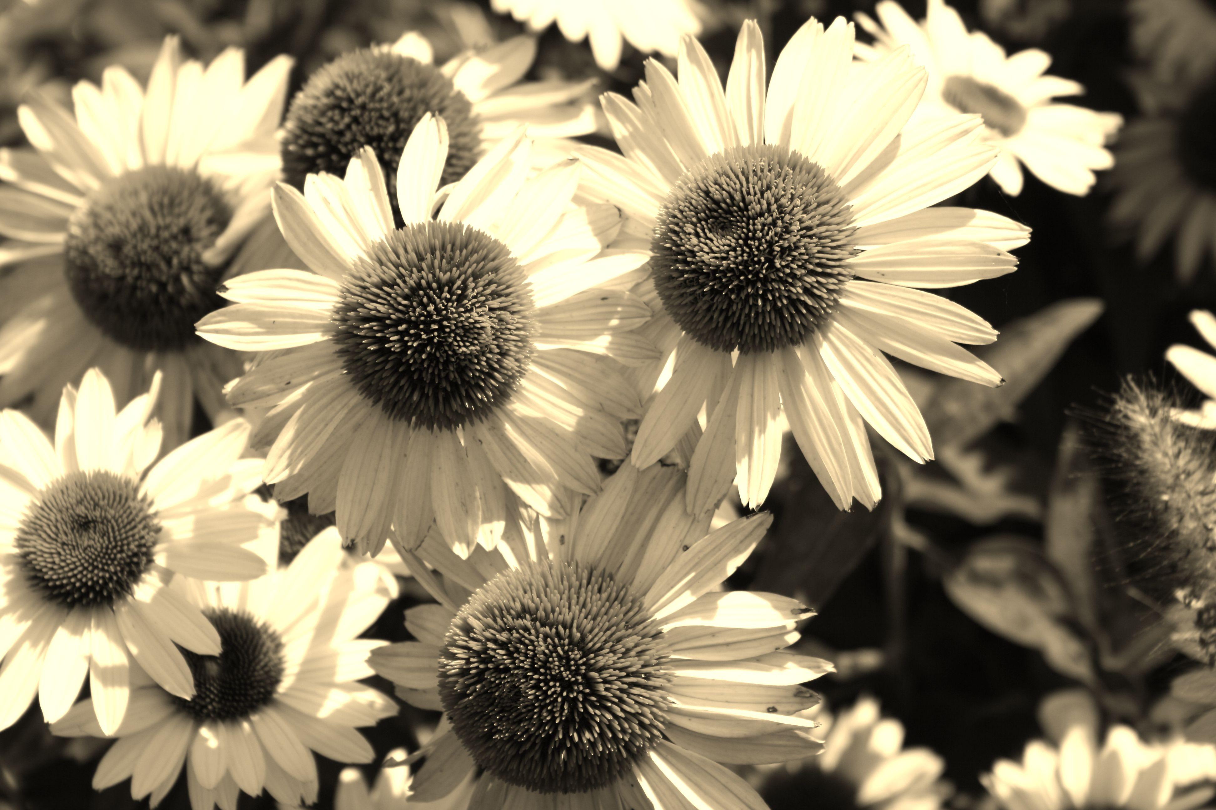 I love daisies! :)