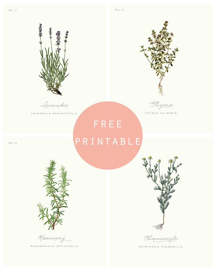 Free Printable: BOTANICAL PRINTS | Flower & Herbs | Pinterest ...