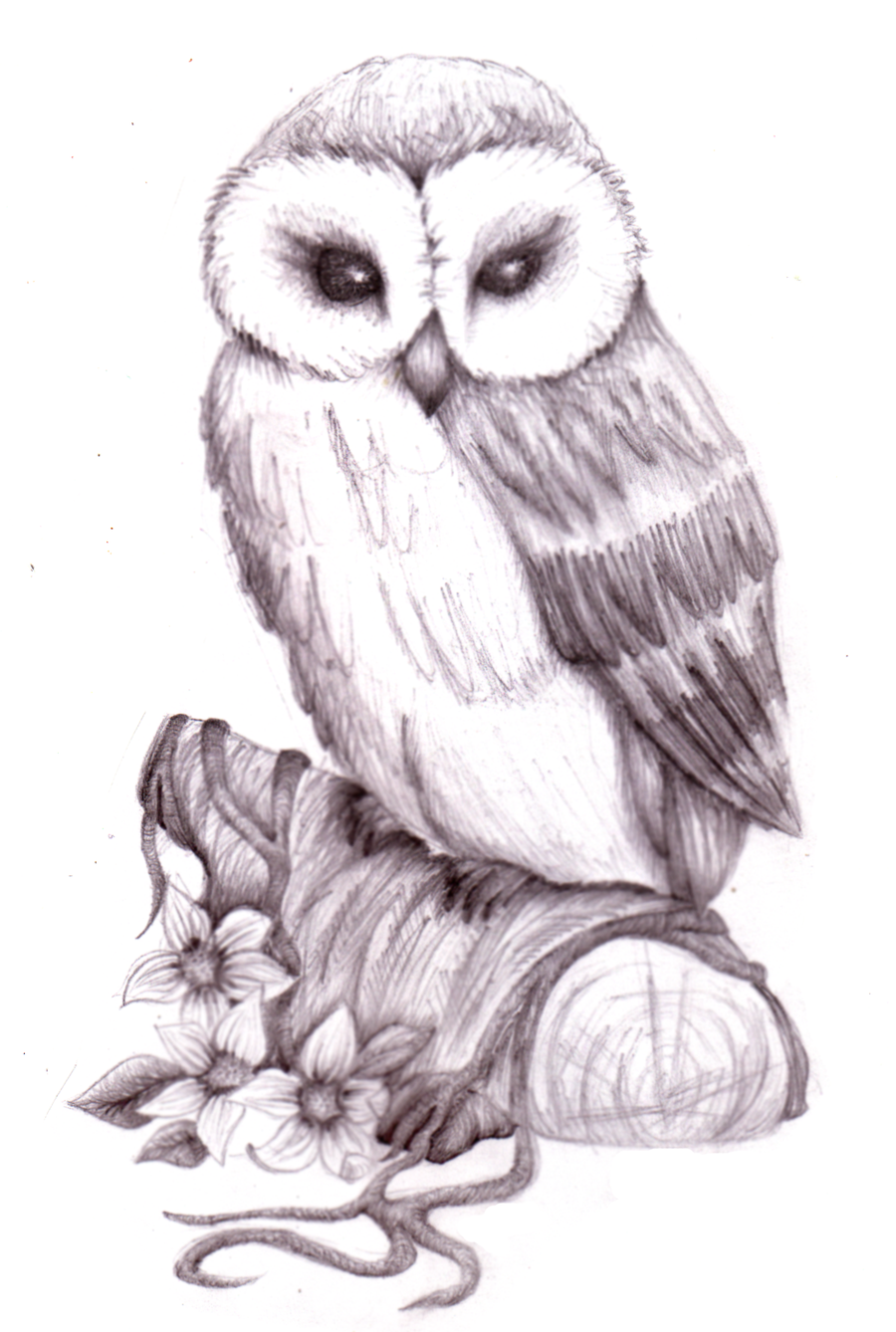 Owl Pencil Sketch