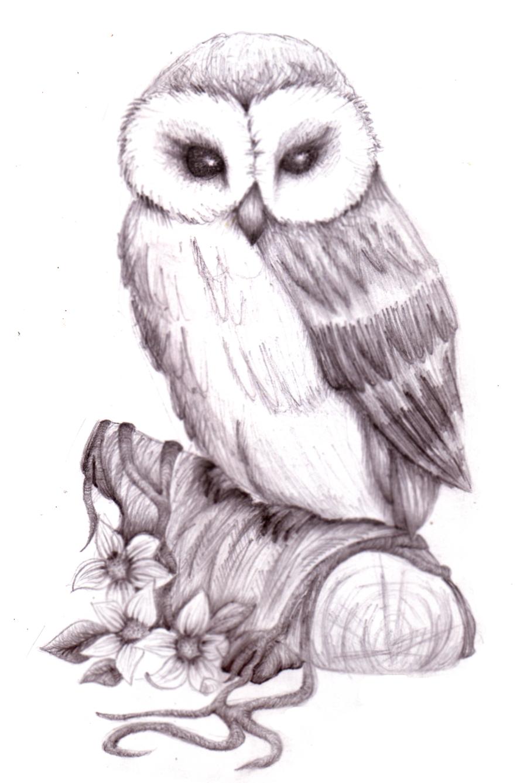 Pencil Art Gallery Pencil Drawings Of Animals Owl pencil