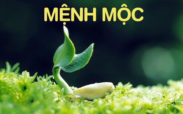 menh-moc-hop-so-gi