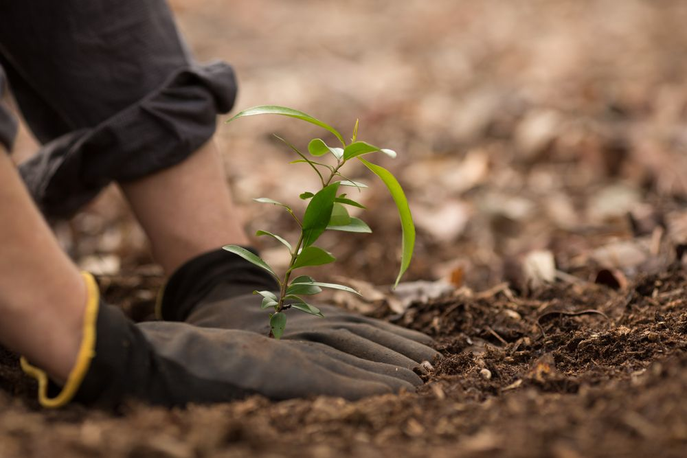 We Can't Just Plant Billions of Trees to Stop Climate