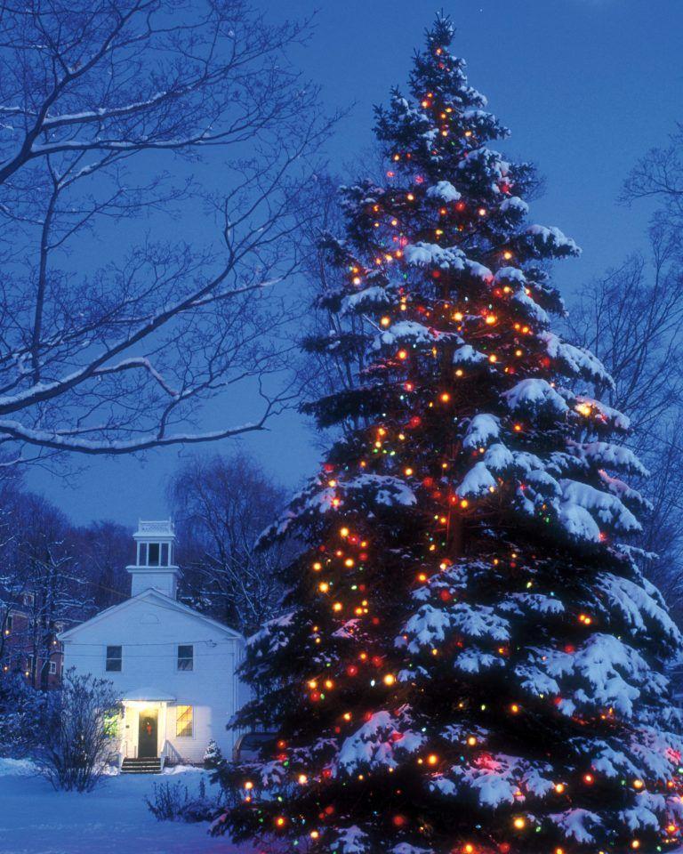 Natale neve inverno paesaggio natura freddo invernale albero neve paesaggio nevoso. Paesaggi Natalizi Il Magico Mondo Dei Sogni Outdoor Christmas Outdoor Christmas Tree Outdoor Christmas Lights