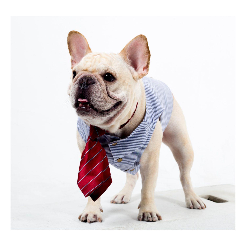 French Bulldog Clothing British Gentleman Sky Blue Stripe Vest For