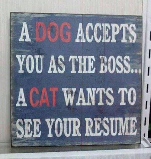 Cat vs Dog resume Funny or cute pics from FB Pinterest Cat vs
